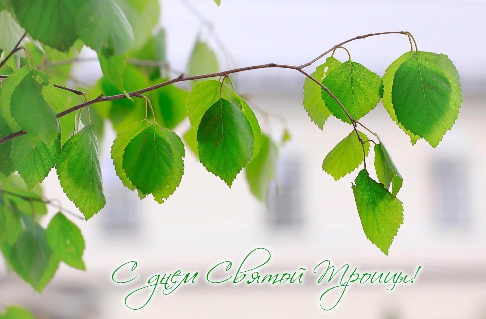 Приветствия! Поздравления! Объявления - Страница 10 S-prazdnikom-svjatoj-troitsy-02-06-2017